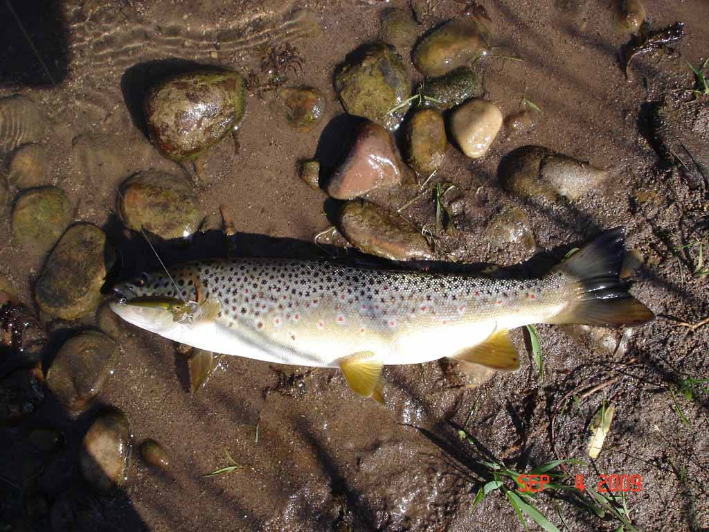 Weber river upper for Weber river fishing report